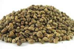 semillas canamo_propiedades